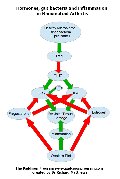 Hormones and Inflammation in RA
